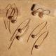 earrings on stone background